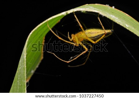 yellow spider back position  #1037227450