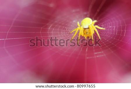 yellow spider on net #80997655