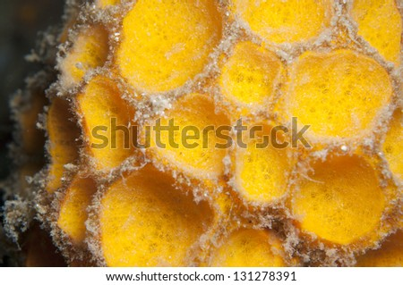 Yellow sponge detail in Bohol.