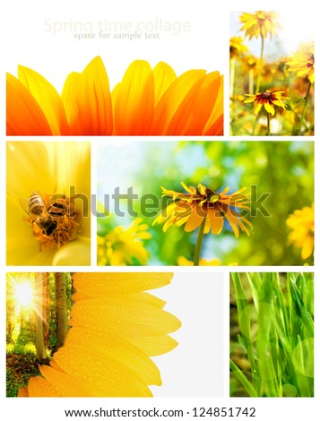 yellow spring collage from several image with space for sample text