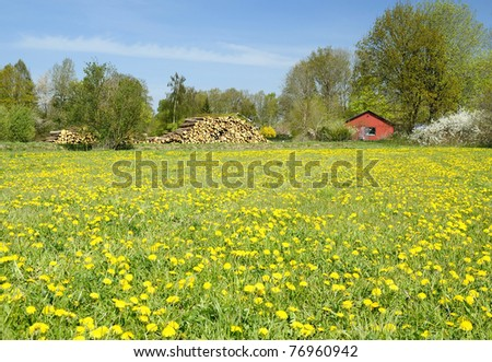 Yellow spring field in countryside - stock photo