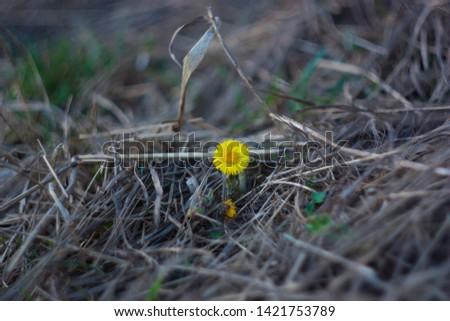Yellow Spring  flower beautiful pics
