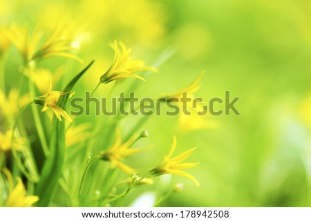 Yellow spring flowers macro close-up