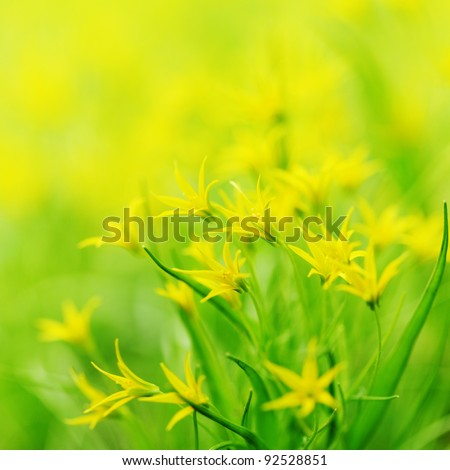 yellow spring flowers macro close up