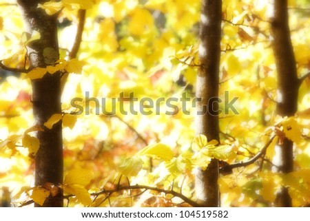 Yellow spring leaves in forest