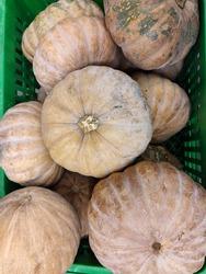 Yellow squash (Cucurbita moschata Durch), a fruit that contains high beta carotene.