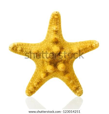 Yellow starfish isolated on white  background