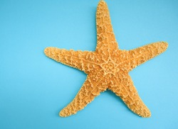 yellow starfish on a blue background