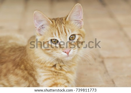 yellow stray kitty cat portrait #739811773