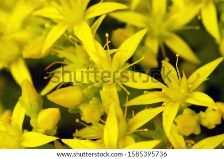 Yellow summer flowers macro photography