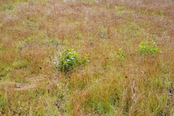 Yellow sun-burnt grass in a rural uncultivated field