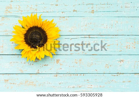 Yellow sunflower on light blue wood background with copy space.