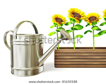 yellow sunflowers and chrome watering can isolated on white