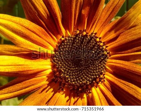 yellow sunflowers near. #715351966