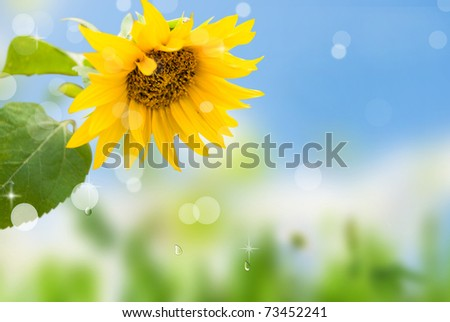 yellow sunflowers with green leaf on background blue sky with rays sun