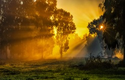 Yellow sunrise in morning forest nature view