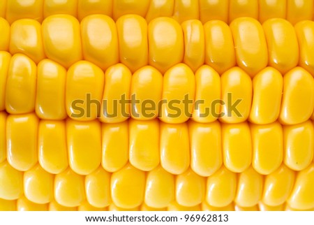 Yellow sweet corn on background