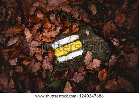 Yellow tourist sign  on the rock between the brown  leafs in the forest at fall.  Tourist marking in forest on the stone in autumn time.  Illuminated closeup Color mark for hiking tourists in nature. #1240247686