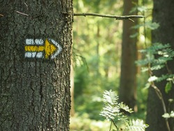Yellow tourist sign pointing to the right drawn on spruce trunk in the czech woods.