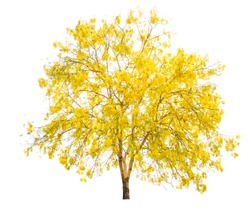 Yellow tree, flowers in autumn season isolated on white background