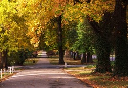 Yellow tree lined road in Saint Louis Tower Grove Park