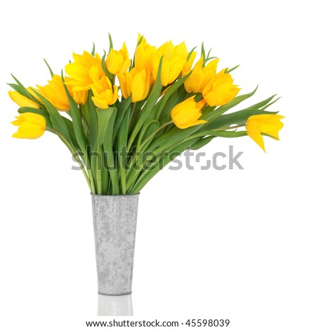 Yellow tulip flowers  in an aluminum vase, over white background.