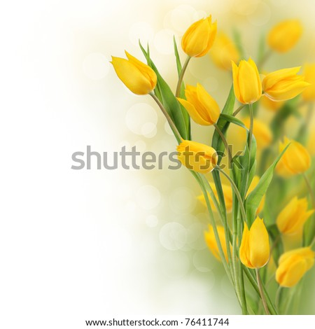 Yellow tulip flowers with copy space