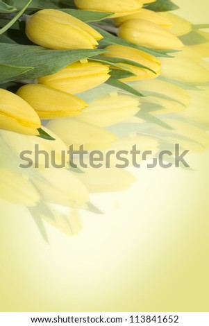 Yellow tulips background with free space for text