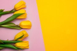 Yellow tulips flowers on a yellow-pink background. Waiting for spring. Happy Easter card. Flat lay, top view. Copy space for text