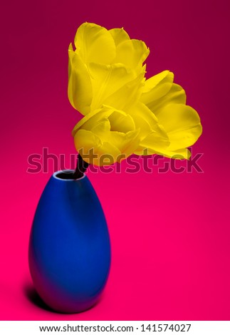 Yellow tulips in blue vase