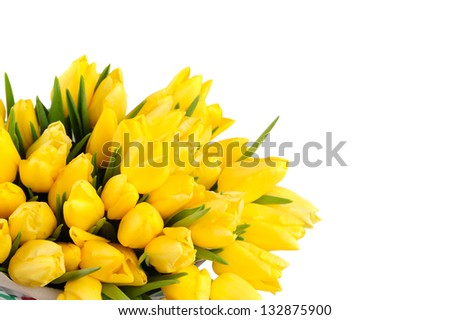 Yellow Tulips isolated over white background