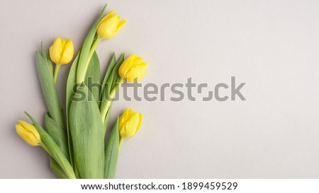 yellow tulips on a gray background, banner, top view, spring bouquet Stock photo ©