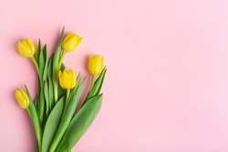 yellow tulips on a pink background, top view, spring bouquet