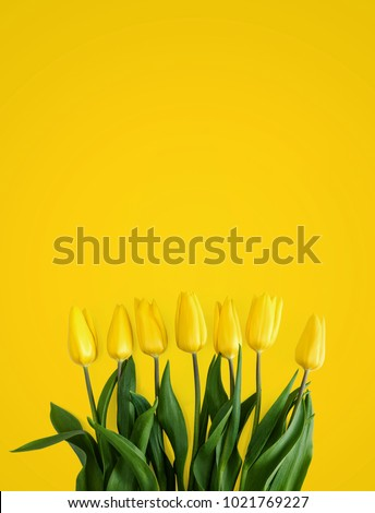 Yellow tulips on a yellow background #1021769227