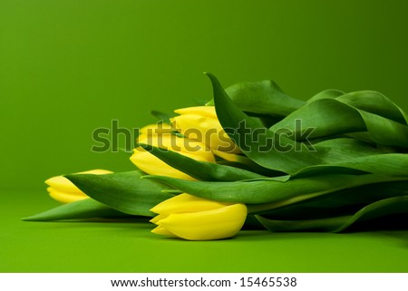 Yellow Tulips on Green background