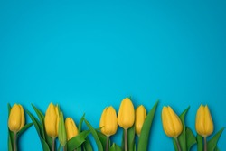 Yellow tulips on the blue background, with free space for text.