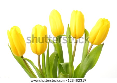 Yellow Tulips/Spring Flowers