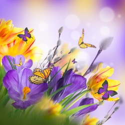 Yellow tulips with willow and crocuses on a white background. Spring Easter card from flowers.