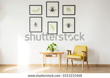Yellow vintage chair next to wooden table with plant against white wall with gallery of posters in a room interior