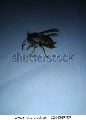 yellow wasp eaten alive #1244349709