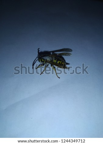 yellow wasp eaten alive #1244349712