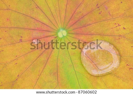 yellow water lilly background with drop water