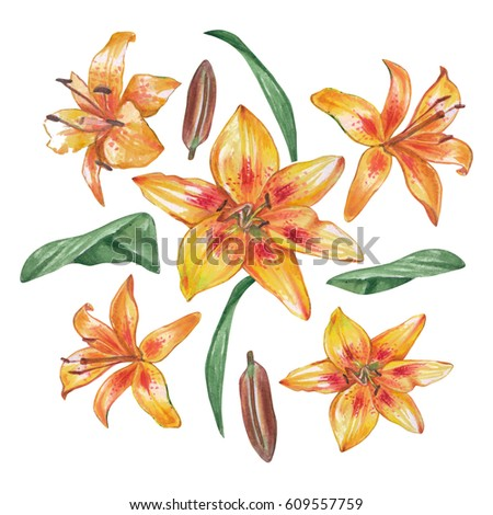 Yellow watercolor lilies on a white background