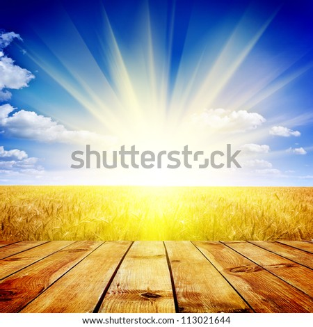 Yellow wheat field under nice sunset cloud sky background