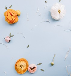 Yellow white and pink Ranunculus flowers and eucalyptus on the light blue background, flat lay with a blank space in the middle