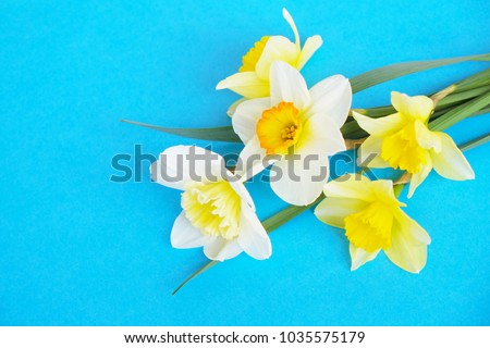 Yellow white daffodil, narcissus, jonquil flower on bright blue background. Blank template for Mother's day, March 8 women's day, Valentine greeting card. Copy space, close up. #1035575179