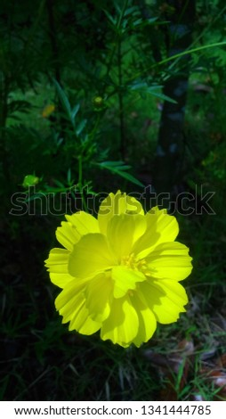 yellow wild flower in exotic pic wallpaper