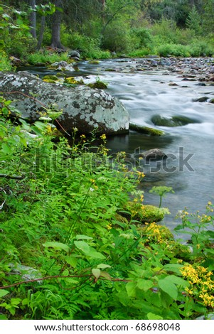 Yellow wild flowers bloom along a flowing Montana stream.