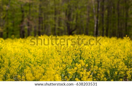 Yellow Wildflowers #638203531