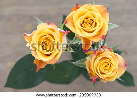 Yellow with red roses